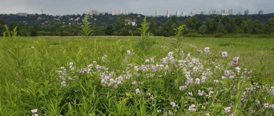 3. Promouvoir une démarche écologique pour préserver la biodiversité